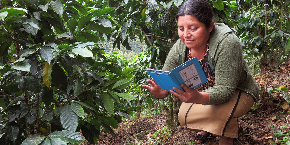 Rainforest Alliance unterstützt Farmer digital