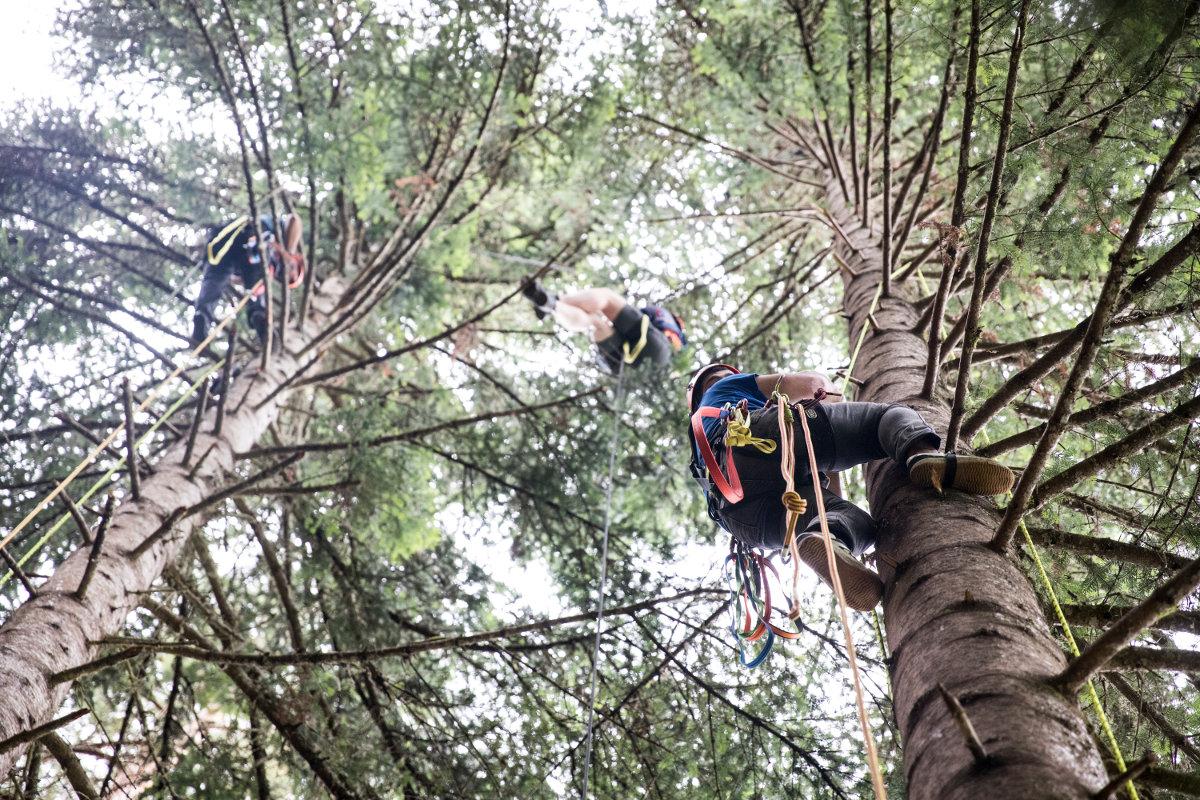 Kletterausrüstung Baum Fällen : Es weihnachtet fair
